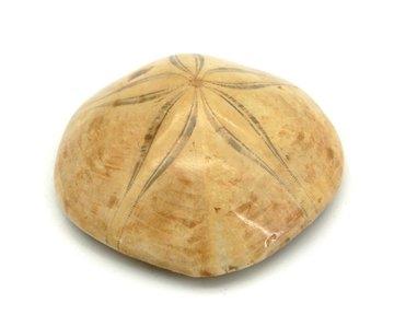 Zee-egel fossiel 86 gram