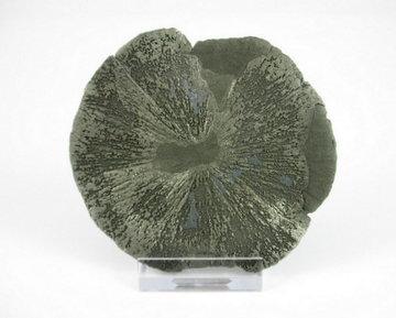 Pyriet zon 100 gram incl. standaard