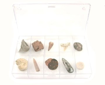 Fossielen verzamelbox 10-delig