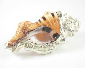 Schelp oranje met liquid silver (Uniek)