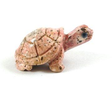 Schildpad Hickoriet